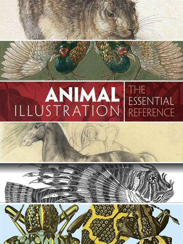 Animal Illustration : The Essential Reference